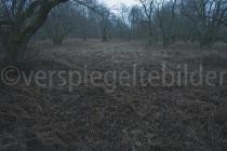 Waldlichtung im Urwald Sababurg