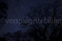 Sternenhimmel mit Eiche im Urwald Sababurg