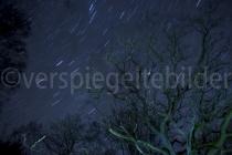 Sternenhimmel mit angeleuchteter Eiche im Urwald Sababurg