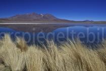 Blick auf die Laguna Cañapa, Bolivien