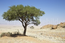 Blick über die Ebene der Tirasberg Conservancy, Namibia