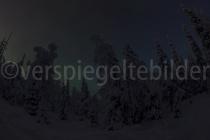 Nordlicht über einem Waldstück bei Luosto