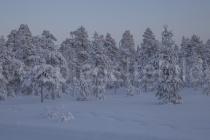 Waldstück bei Luosto
