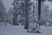 verschneiter Wald bei Luosto