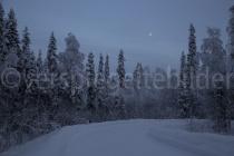Bäume mit Mond bei Luosto