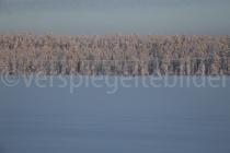 Bäume in der Mittagssonne bei Luosto