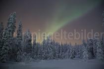 Nordlicht über schneebedeckten Bäumen bei Luosto