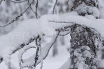 Detail eines schneebedeckten Baumes