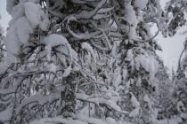 Details eines schneebedeckten Baumes