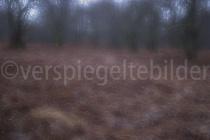 Mehrfachbelichtung mit verschobenem Fokus einer Waldlichtung im Urwald Sababurg
