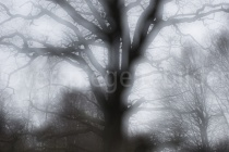 Mehrfachbelichtung einer Eiche im Urwald Sababurg