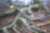 Mehrfachbelichtung von Baumstämmen im Urwald Sababurg