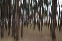 Langzeitaufnahme mit bewegtem Objektiv in einem Wald