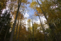 Waldlichtung im Tierpark Langenberg mit Herbstlaub