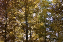 Wald mit Herbstlaub im Tierpark Langenberg