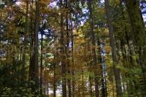 Waldlichtung im Tierpark Langenberg