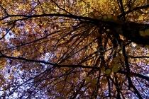 Baum mit buntem Herbstlaub im Tierpark Langenberg