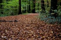 Wald im Tierpark Langenberg