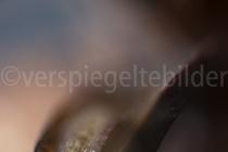 Makroaufnahme eines Tannzapfens