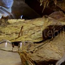 Brille auf getrockneten Tabakblättern an einem Arbeitsplatz