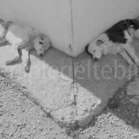 Zwei schlafende Hunde in der Mittagshitze