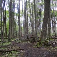 Wald in Ushuaia in Feuerland, Patagonien