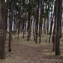 Blick in einen Wald bei Cuzco in Peru