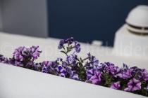 Blick durch Blumen und über weisse Mauern aufs Meer