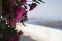 Blick durch Blumen auf die (unscharfe) Caldera
