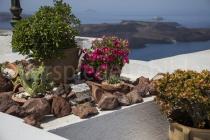 Blick durch Blumen auf die Caldera
