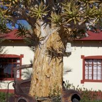 Köcherbaum in einem Auto in der Canyon Lodge, Namibia