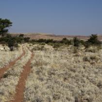 Fahrspur durch die Schafweide der Dabi Farm bei Helmeringhausen, Namibia