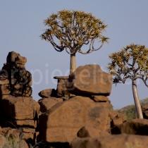 Giants Playground mit grossen Steinen und Köcherbäumen, Namibia