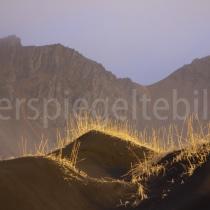 Stand mit schwarzem Sand und Strandhafer bei Stokksnes, Island