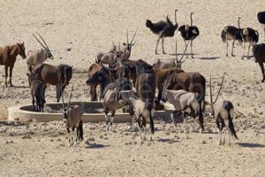 Wasserloch mit Pferden, Straussen und Oryx Antilopen bei Helmeringhausen, Namibia