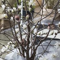 Spigel mit Gesichtern in einem Baum mit Blüten