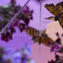 Spiegelungen von Schmetterlingen und Blumen in einer Spiegelkonstruktion