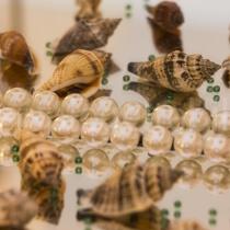 Spigelungen von Muscheln und Perslen in einer Spiegelkonstruktion