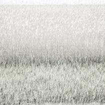 überbelichtetes Schilf am Bodensee als abstrakte Landschaft