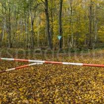 Waldstück in Darmstadt