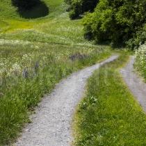 Feldstrasse bei Savognin durch Blumenwiesen