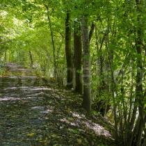 Am Ufer der Sihl unter dem grünen Blätterdach