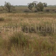 Blick über die Heidelandschaft in der Camargue