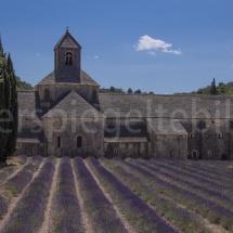Blick durch die Lavendelreihen auf die Abbaye de Sénaque in der Provence