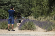 Touristen fotografieren die Lavendelreihen bei der Abbaye de Sénanque in der Provence