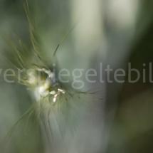 Botanischer Garten St. Gallen, feine grün-weisse Planze vor unscharfem grünem Hintergrund