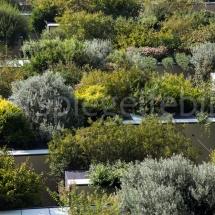Bosco Verticale Hochhäuser mit Bepflanzung, Ausschnitt der Pflanzen