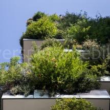 Bosco Verticale Hochhäuser mit Bepflanzung, Ausschnitt von besonnten Plfanzen
