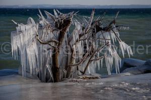 Vereister Busch am Ufer des Bodensees