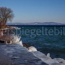 Vereiste Steine und Büsche am Ufer des Bodensees